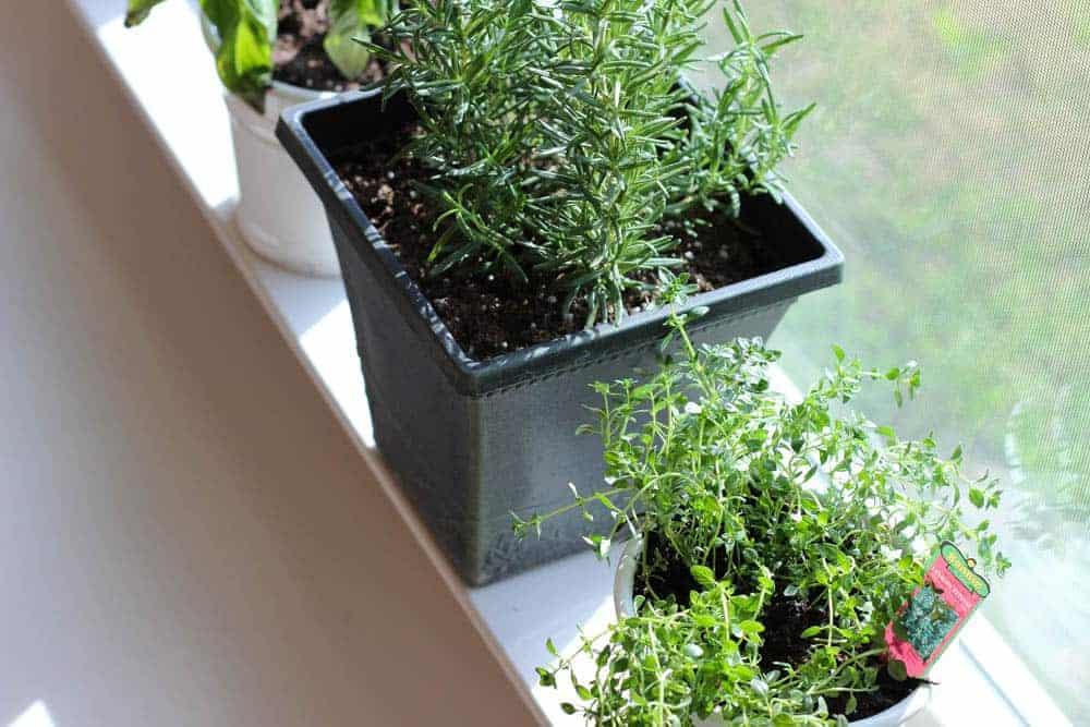 Growing an Indoor Herb Garden!
